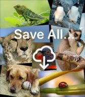 "animal mosaic with words ""save all"" and a download arrow"