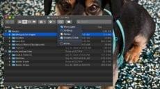 macOS Finder window showing share menu - dog wallpaper